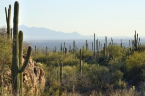 How to Become a Counselor in Arizona